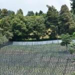 Cultivos-arandanos-9