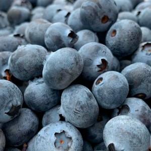 Cultivo de arándanos azules en Colombia se han triplicado
