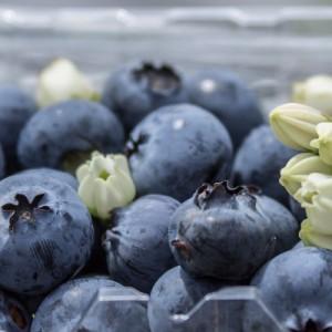 Colombia busca estar entre los diez exportadores de arándanos